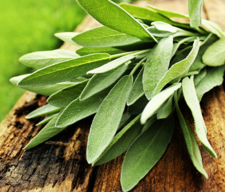 Sage Essential Oil